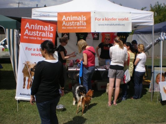 Frankston Pets Day Out 2013